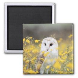 Barn Owl In Meadow Magnet