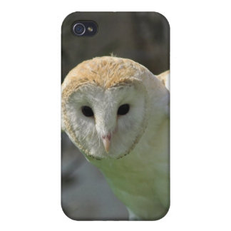 Barn Owl iPhone Case Covers For iPhone 4