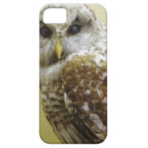 Barn Owl iPhone SE/5/5s Case