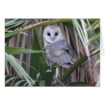 Barn Owl – Joe Sweeney – card