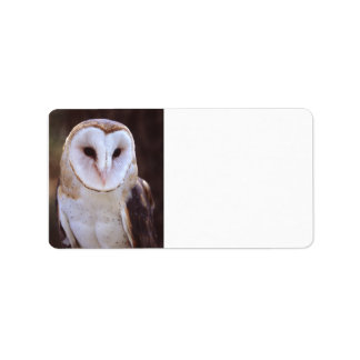 barn owl address label