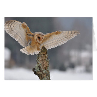 Barn owl landing to spike card