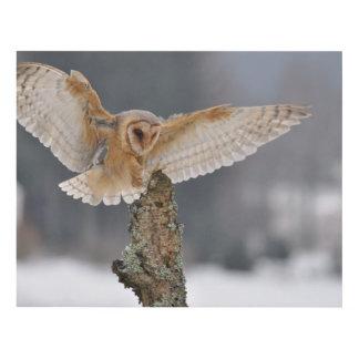 Barn owl landing to spike panel wall art
