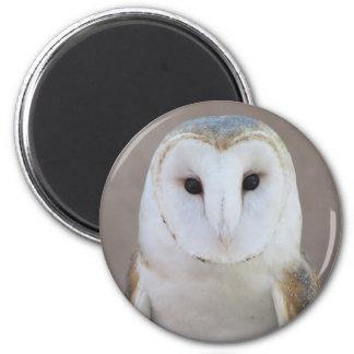 Barn Owl Magnet