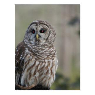 barn owl night bird of prey postcard