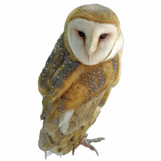 Barn Owl - Ornament Cut Out