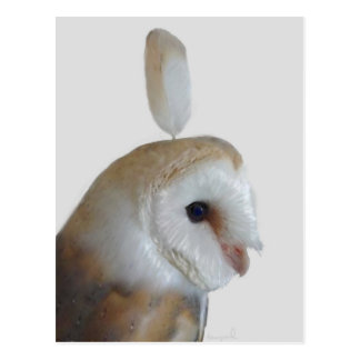Barn Owl Pattern Postcard