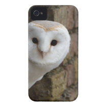 Barn Owl Peeks Out iPhone 4 Case