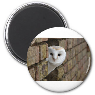 Barn Owl Peeks Out Magnet