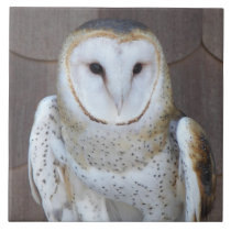 Barn Owl Photo Tile