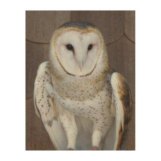 Barn Owl Photo Wood Wall Decor