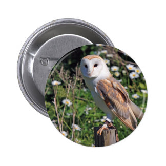 Barn Owl Pinback Button