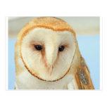 Barn owl post cards