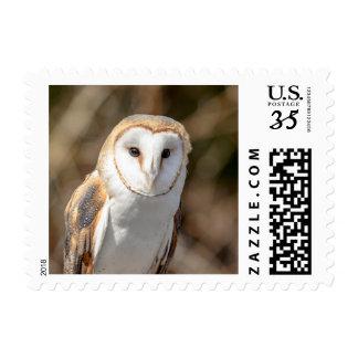 Barn Owl Postage