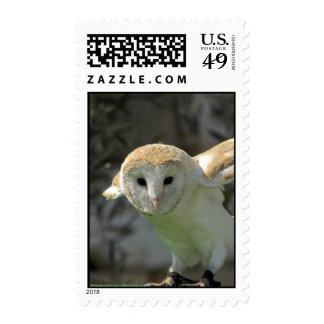 Barn Owl Postage Stamp