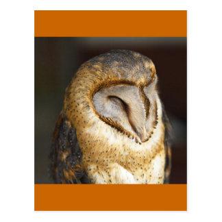BARN-owl Postcard