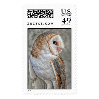 Barn Owl Profile Stamp