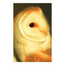 Barn owl stationery