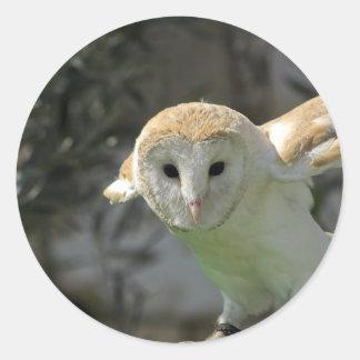 Barn Owl Stickers