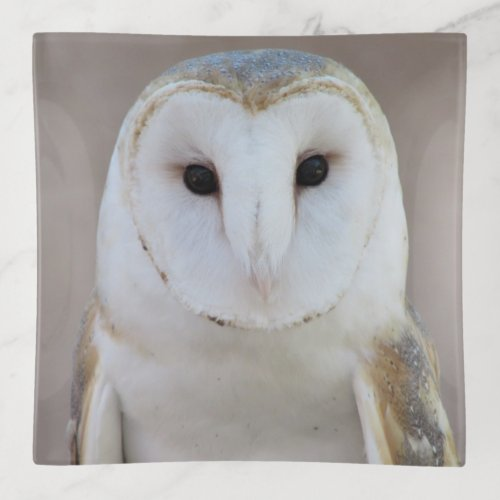 Barn Owl Trinket Trays