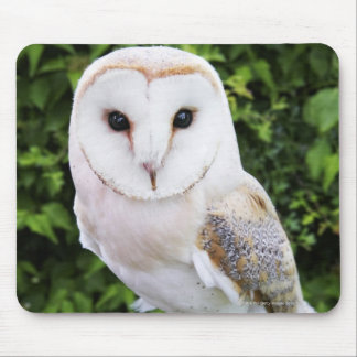 Barn owl (Tyto Alba) on glove Mouse Pad