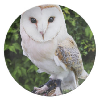 Barn owl (Tyto Alba) on glove Party Plate