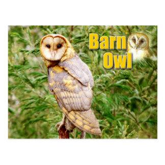Barn Owl (Tyto alba) Postcard