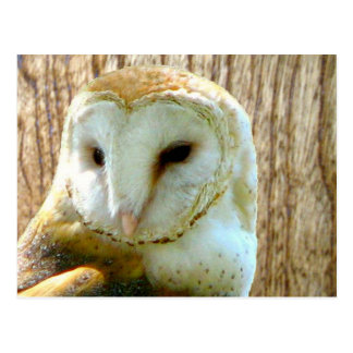 Barn Owl Woody Postcard