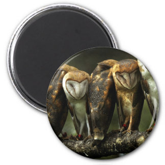 Barn Owls magnet