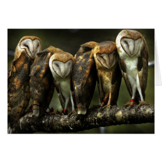 Barn Owls note card