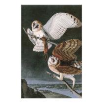 Barn Owls, the Birds of America John James Audubon Stationery