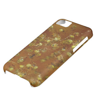 Barn Spiders iPhone 5C Covers