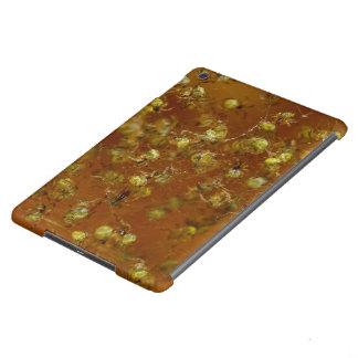 Barn Spiders Case For iPad Air