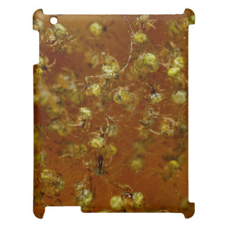 Barn Spiders iPad Covers
