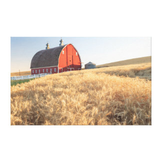 Barn, summer wheat fields near Sprague, Eastern 1 Canvas Print