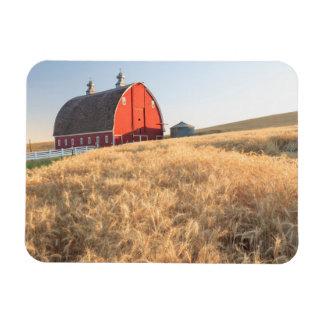 Barn, summer wheat fields near Sprague, Eastern 1 Magnet