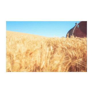 Barn, summer wheat fields near Sprague, Eastern 2 Canvas Print