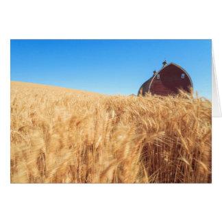 Barn, summer wheat fields near Sprague, Eastern 2 Card