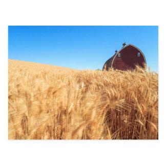 Barn, summer wheat fields near Sprague, Eastern 2 Postcard