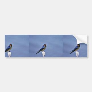 Barn swallow car bumper sticker