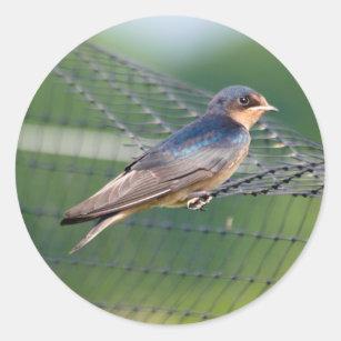 Barn Swallow Classic Round Sticker
