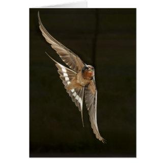 Barn Swallow in flight Card