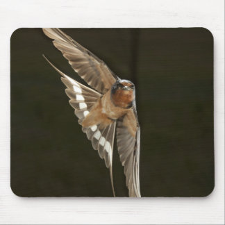 Barn Swallow in flight Mouse Pad