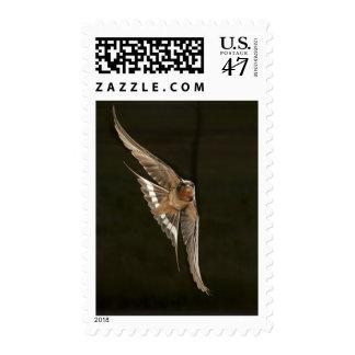 Barn Swallow in flight Postage