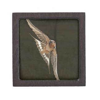 Barn Swallow in flight Premium Keepsake Box
