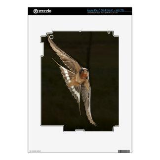Barn Swallow in flight iPad 3 Skin
