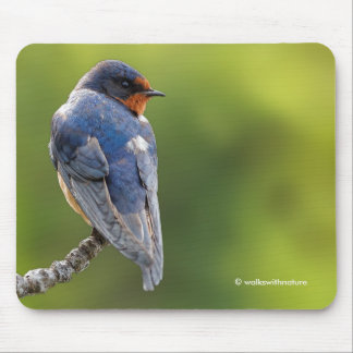 Barn Swallow on a Branch Mouse Pad