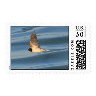 Barn Swallow Postage