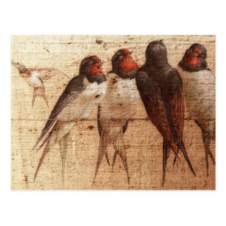 Barn Swallows Postcard
