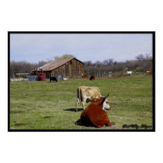 Barn With Cattle Poster